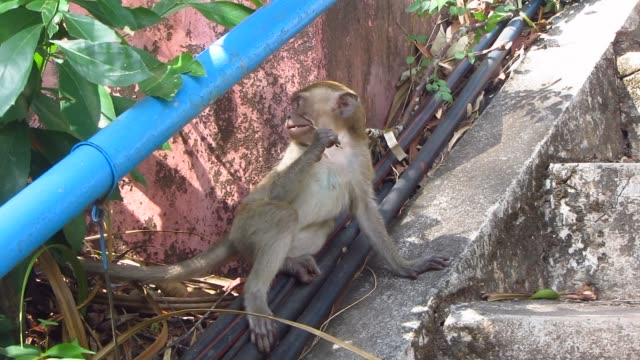 Monkeys-on-a-Staircase