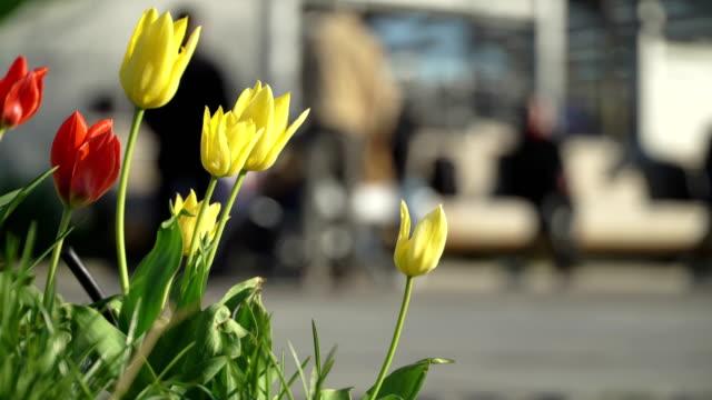 Roten-und-gelben-Blumen-Tulpen-im-Frühling-Stadtpark-im-Hintergrund-unkenntlich-Menschenmenge-auf-Fahrräder-Scooter-skateboards