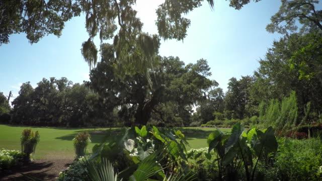 Ancient-Oak-Tree-in-a-Field