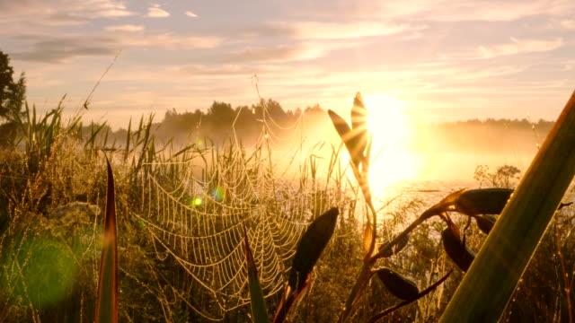 Rocío-de-la-mañana-sobre-la-araña-contra-fondo-puesta-de-sol