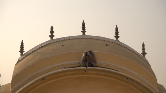 Some-langur-monkeys-are-playng-on-a-rooftop-in-Varanasi-India-