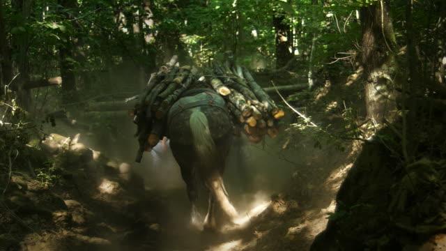 Caballo-de-trabajo-transporte-de-madera-en-el-sendero-del-bosque