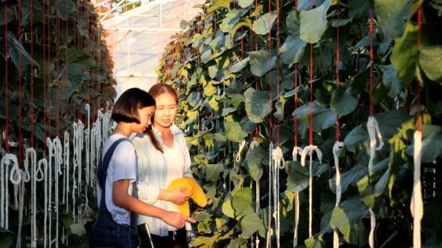Asiatische-Frau-Bauer-und-Mädchen-Überwachung-Der-Melonenproduktion