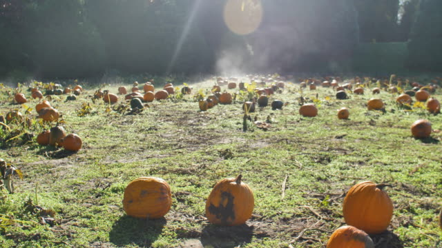 Morning-Fog-on-a-Pumpkin-Patch-Burns-off-in-Sunny-Weather