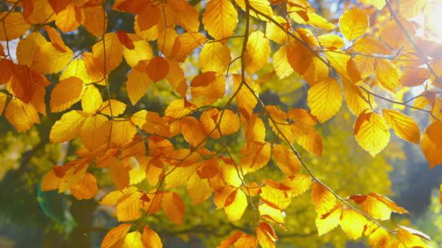Autumn-Impressions---beautiful-autumn-leaves---change-of-focus