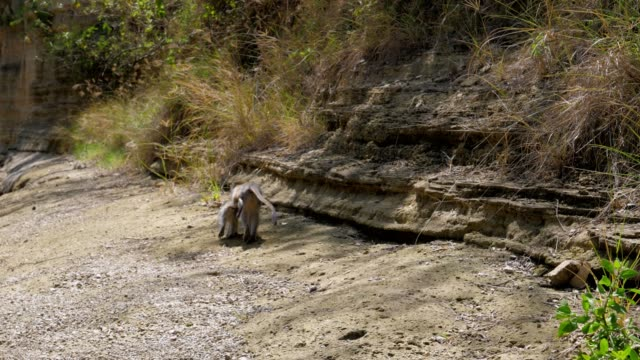 Monkey-With-The-Baby-Go-Away-From-The-Camera-To-The-Canyon-On-The-Dried-Riverbed