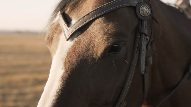 Close-up-of-eyes-of-thoroughbred-racehorse-in-slow-mo-Eyes-of-beautiful-horse
