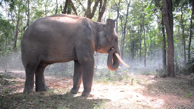 Young-elephant-is-enjoy-playing-dirt-in-the-jungle-