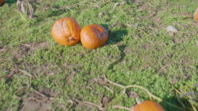 Pumpkin-Field-Overview-October-Food