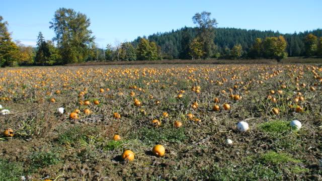 Panorama-of-Pumpkin-Patch-Farm
