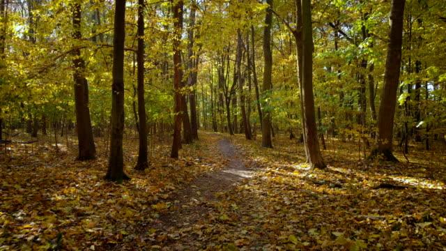 Herbstnachmittag-in-einem-grünen-Wald