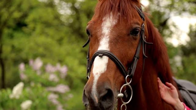 Primer-plano-de-la-boca-de-un-caballo-marrón-con-una-mancha-blanca-en-el-parque-