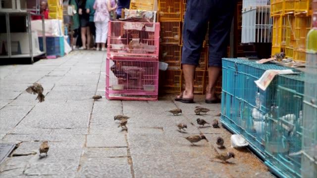 cámara-lenta-pájaros-comer-las-semillas-de-la-planta-en-un-mercado-ocupado