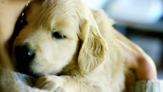 Portrait-of-a-girl-holding-a-cute-golden-retriever-puppy-