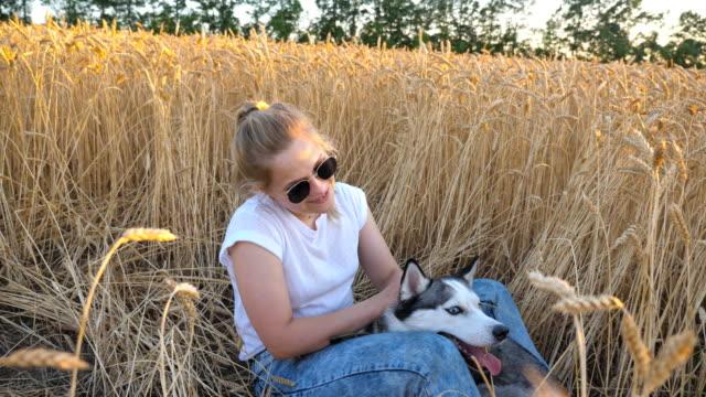 Dolly-Schuss-glücklich-Frau-mit-blonden-Haaren-die-im-Bereich-der-Reife-Weizen-sitzen-und-streicheln-ihre-Siberian-Husky-Hund-bei-Sonnenuntergang-Junge-Mädchen-in-Sonnenbrille-streichelte-ihr-niedliche-Haustier-unter-golden-Ährchen-an-Wiese-