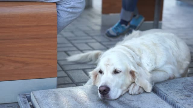 animal-friendly-cafe---the-dog-is-resting-in-a-cafe-waiting-for-the-hosts