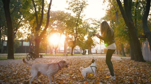 Junge-Frau-spielt-mit-zwei-Hunden-im-Herbst-Park-während-des-Sonnenuntergangs-Zeitlupe