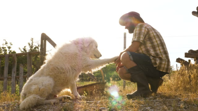 Young-farmer-petting-maremma-sheepdog-at-sunset-in-vegetable-garden-Italy-