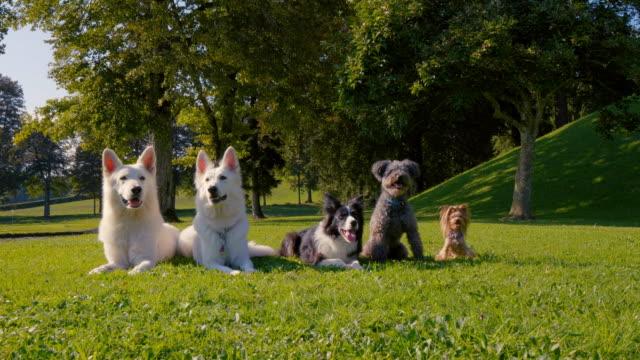 Fünf-Hunde-liegen-im-Park-in-einer-geraden-Linie-verschiedene-Rassen-von-der-größten-bis-zu-den-kleinsten-