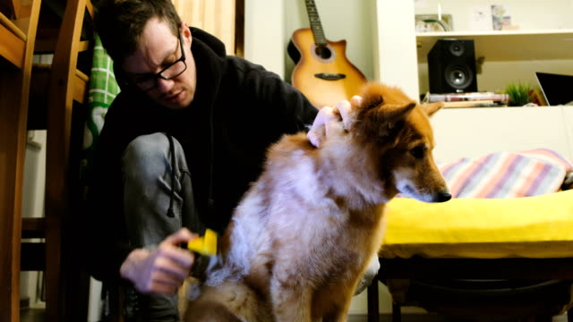 Man-combs-the-shreds-of-the-wool-from-the-dog-at-home