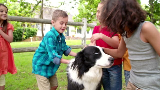 Little-boys-playing-with-a-Border-Collie-dog-in-park
