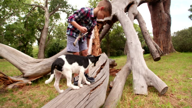 Playful-dog-playing-with-stick-a-little-boy-is-holding