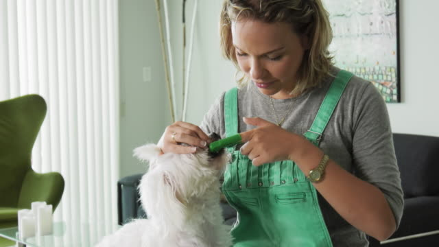 Woman-Cleaning-Dog-Mouth-Teeth-With-Toothbrush