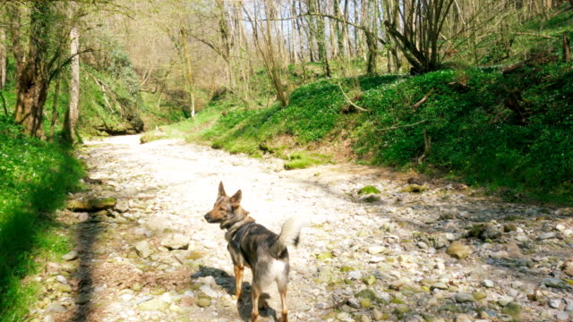 Dog-Exploring-Wild-Woods-and-Riverbed