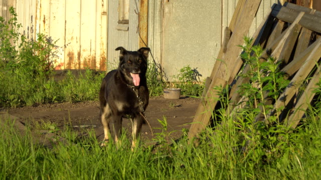 watchdog-on-chain-guarding-the-area