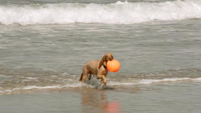 Perro-mojado-trae-bola-del-mar