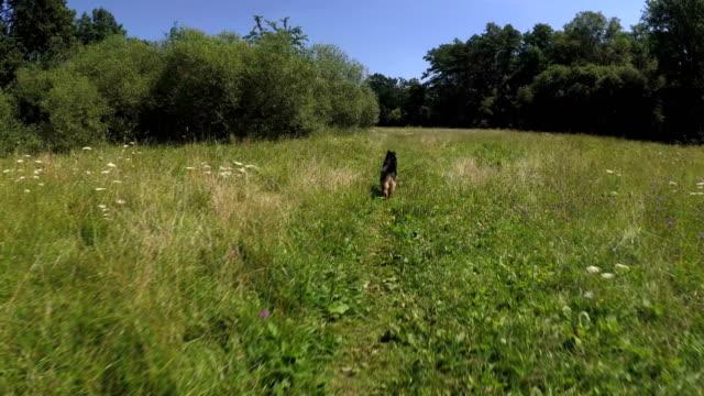 El-perro-corre-en-el-parque-