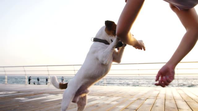 Joven-formación-lindo-perro-Jack-Russel-cerca-del-mar