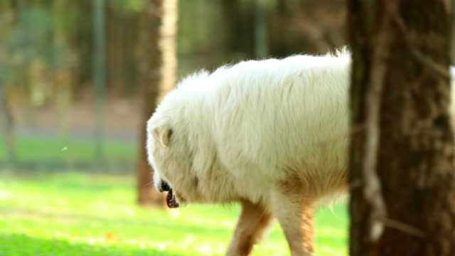 Beautiful-pure-bred-dog-forgaging-in-the-great-outdoors-for-food-in-4k-clip-resolution-Dog-sniffing-smelling-for-clues-in-the-sunlight-outside