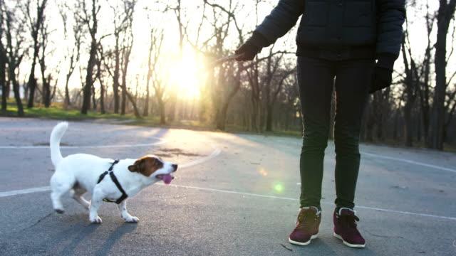 Joven-jugando-con-lindo-jack-terrier-russel-en-el-parque-con-la-bola-cámara-lenta