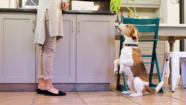 Verzweifelten-Hund-mit-Blick-auf-seinen-Besitzer-und-bellen-4K-4k