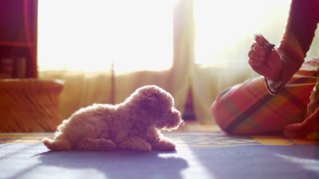 Liebenswert-und-neugierig-Hund-Haustier
