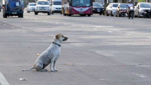 Stray-Dog-Sits-on-the-Road-with-Passing-Cars-and-Motorcycles-Asia-Thailand