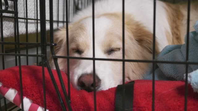 cute-dog-in-cage-sleeping