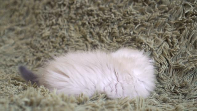Gatito-juguetón-tendido-sobre-el-piso-jugando-con-un-juguete-de-ratón
