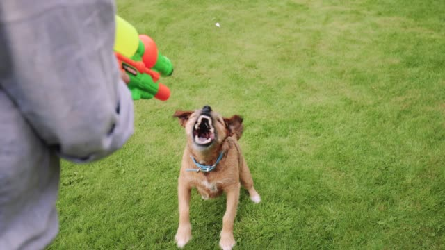 Waterfight-with-the-Dog