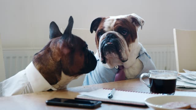 Close-up-of-two-dogs-at-a-meeting-in-a-business-meeting-room