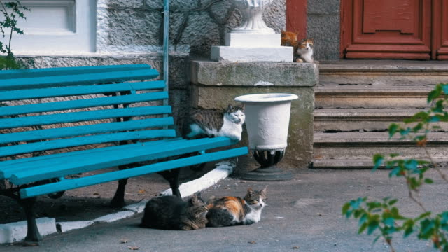 Many-stray-cats-sitting-near-a-bench-in-the-park
