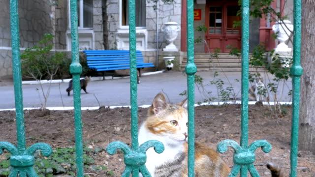 Un-gato-de-tres-colores-sin-hogar-paseos-en-el-Parque-fuera-de-la-valla-y-las-moscas