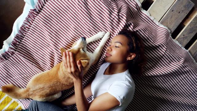 Draufsicht-der-attraktive-afroamerikanische-Frau-streicheln-schöne-Shiba-Inu-Hund-auf-Bett-liegend-zusammen-zu-Hause-Junge-Menschen-Haustieren-Glück-und-Liebe-Konzept-