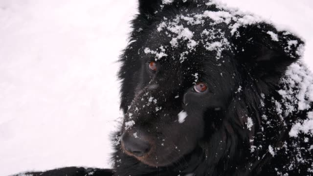 Homeless-Dog-In-Winter-Snowfall-Looks-At-The-Camera-With-Sadness-Eyes