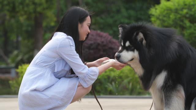Happy-young-asian-woman-feeding-water-to-dog-alaskan-malamute-outdoor-4k