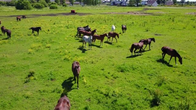 Vista-aérea-de-los-hermosos-caballos-en-el-campo