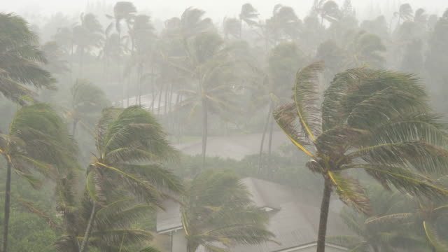 High-Winds-and-Rain-Blow-Palm-Trees-in-Tropical-Storm
