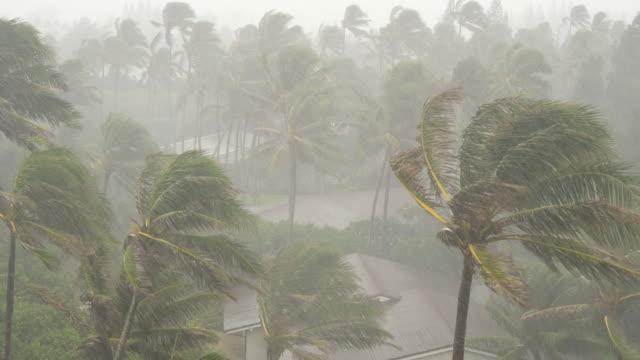 Starke-Winde-und-Regen-Schlag-Palmen-in-tropischer-Sturm