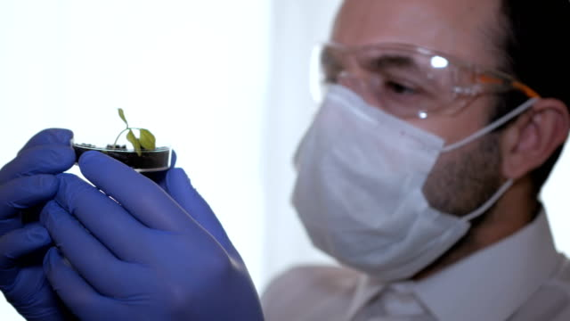 Biologist-examines-sample-Science-biology-ecology-Professional-scientist-wearing-protective-mask-working-with-herb-samples-in-his-laboratory-Male-scientist-looking-at-plant-leaf-in-petri-dish-
